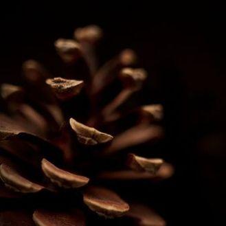 cocoapowder 3